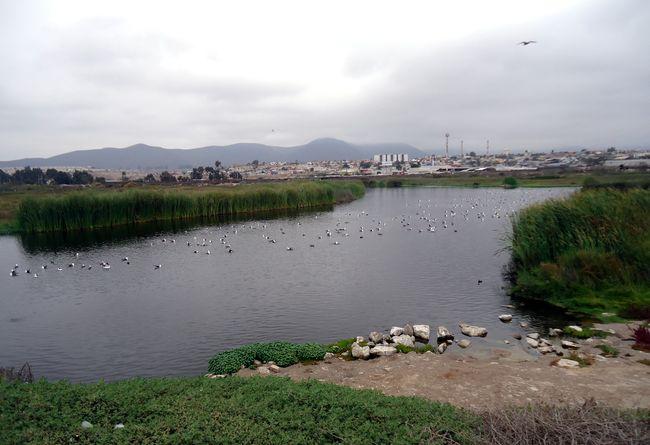 """Humedal """"El Culebrón"""": ¿las instituciones que deben velar por el medio ambiente, son proactivas?"""