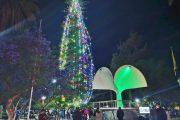 Hasta el 31 de enero el árbol de Navidad natural más grande del país iluminará la plaza de armas de Ovalle