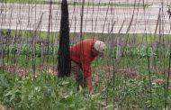 Sindicato de Trabajadores de El Palqui exigen al Gobierno aplicar plan para enfrentar  la situación agrícola