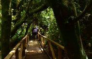 Desembocadura Del Río Limarí: Declaran Área Protegida De La Naturaleza
