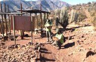 Realizan catastro paleontológico en Monumento Natural de Pichasca