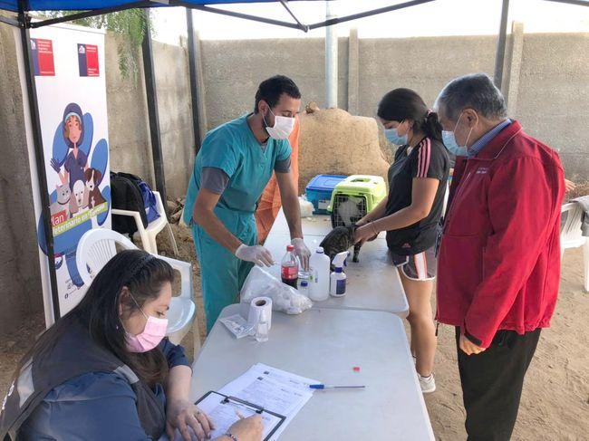 Programa Veterinario en Terreno ha realizado más de 460 intervenciones integrales en la provincia de Limarí