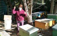 Apicultores reciben insumos para suplir la deficiencia de requerimientos nutricionales de los apiarios