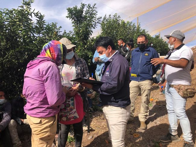 Fiscalización en predios agrícolas arroja alto número de extranjeros ingresados ilegalmente al país