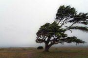 Declaran Alerta Temprana Preventiva para la Región de Coquimbo por evento meteorológico
